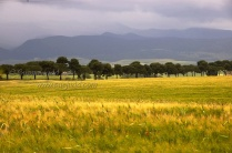 Grass, trees, mountains and clouds, Lazio