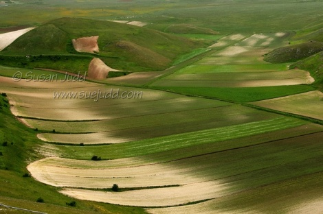 Lentil fields near Casteluccio