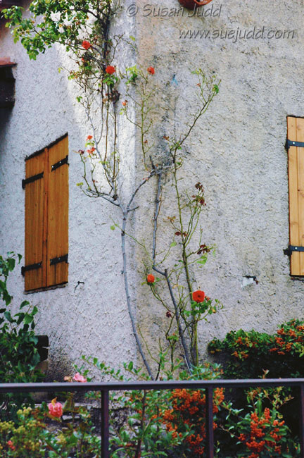 Climbing rose and shutters, Fox Amphoux