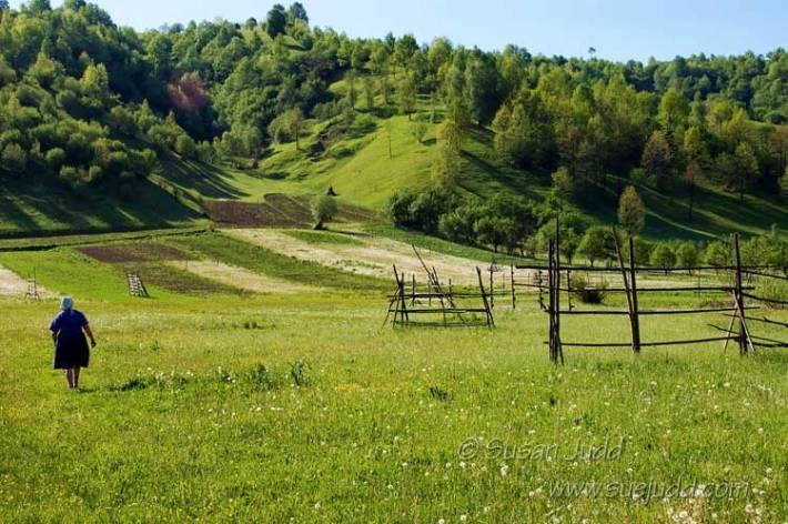 In the fields, Maramures, Romania