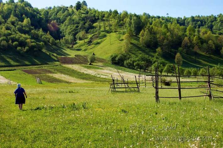 In the fields, Maramures, Romania