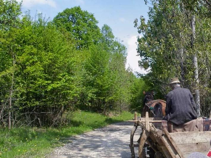 Rural Transylvania