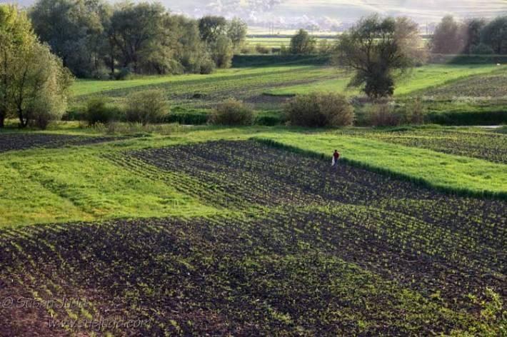 Evening light on fields in Transylvania