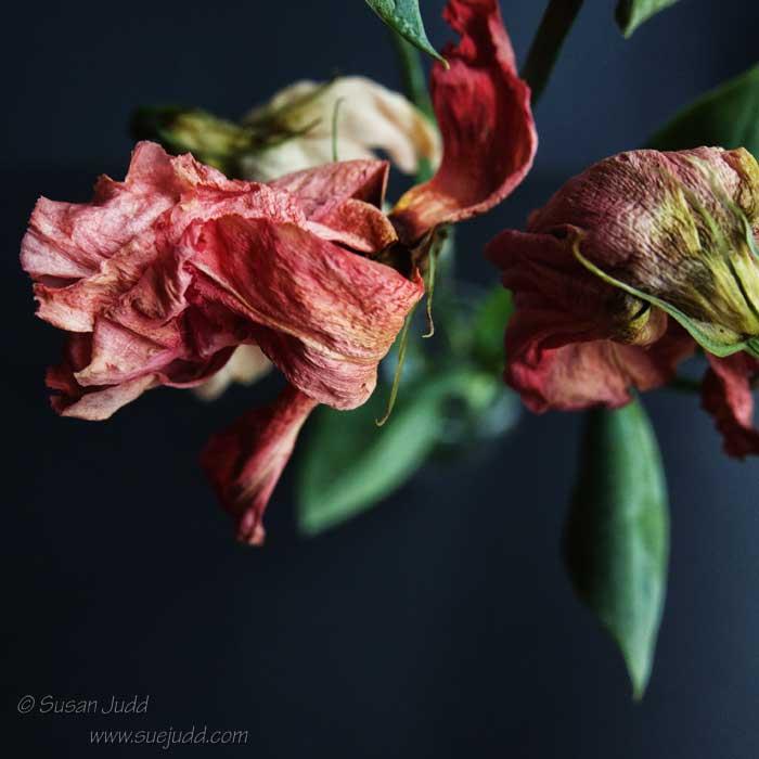 SJudd_Plants__2014-11-17-69---Version-3