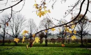 Late autumn scene