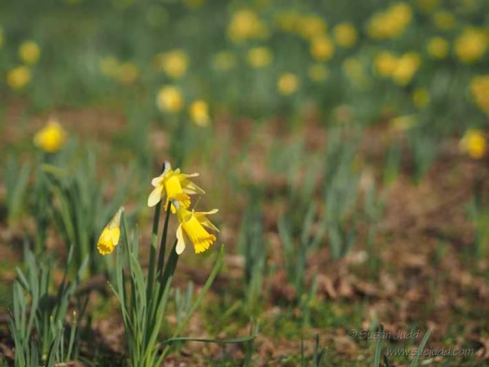 Spring - again