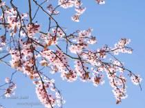 Fresh, beautiful, blossom