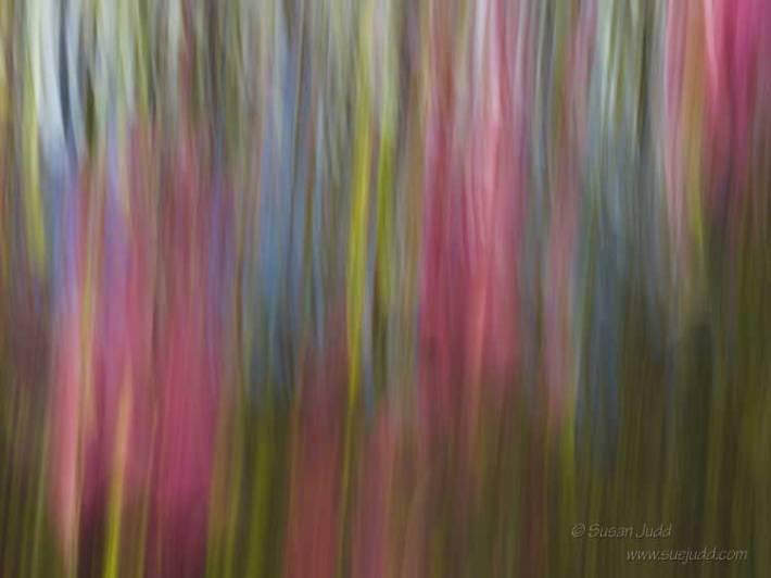 SJudd_Abstract_2015-04-11-28---Version-2