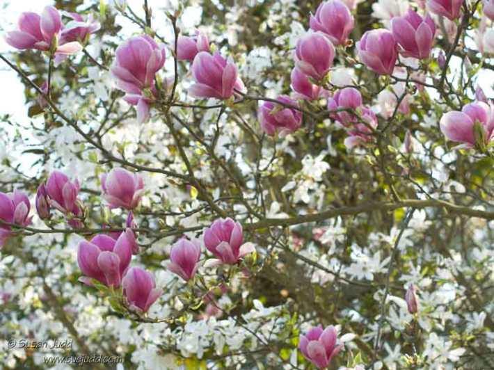 SJudd_Gardens_Walled-Garden_2015-04-09-17---Version-3