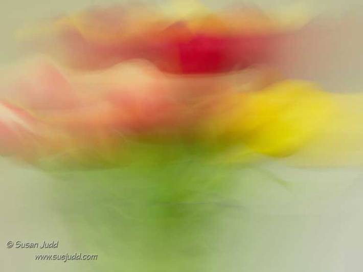 Tulip Abstract 2