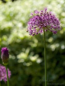 SJudd_Gardens_Walled-Garden_2015-05-24-44---Version-3