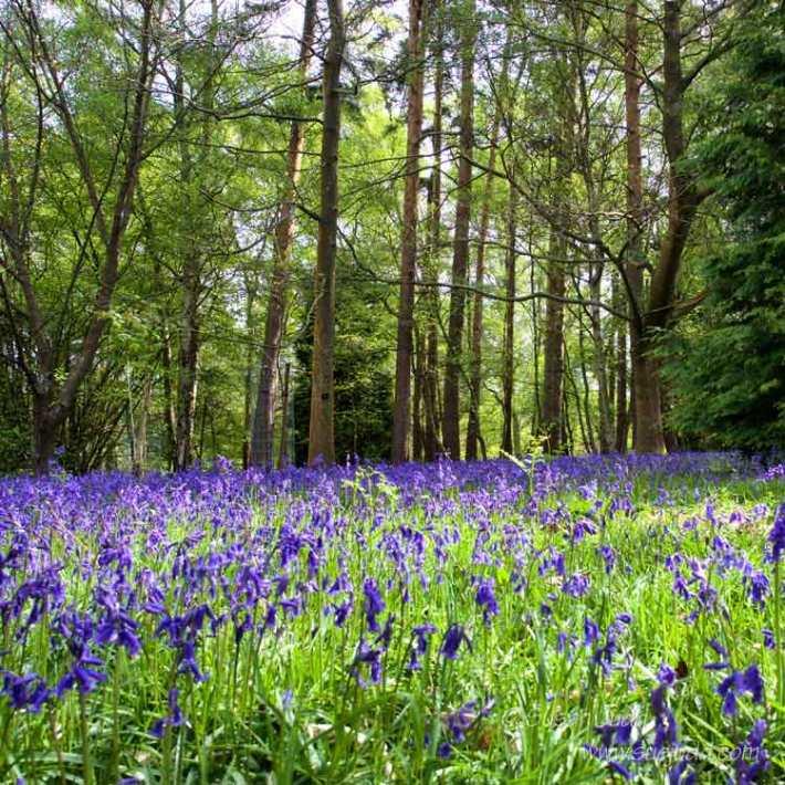 SJudd_Gardens_Winkworth_2015-05-04-37---Version-2
