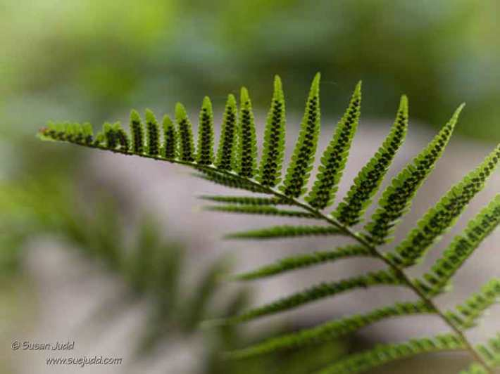 patterns of a fern