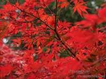 SJudd_Gardens_Sheffield-Pk_2015-10-26-14---Version-2