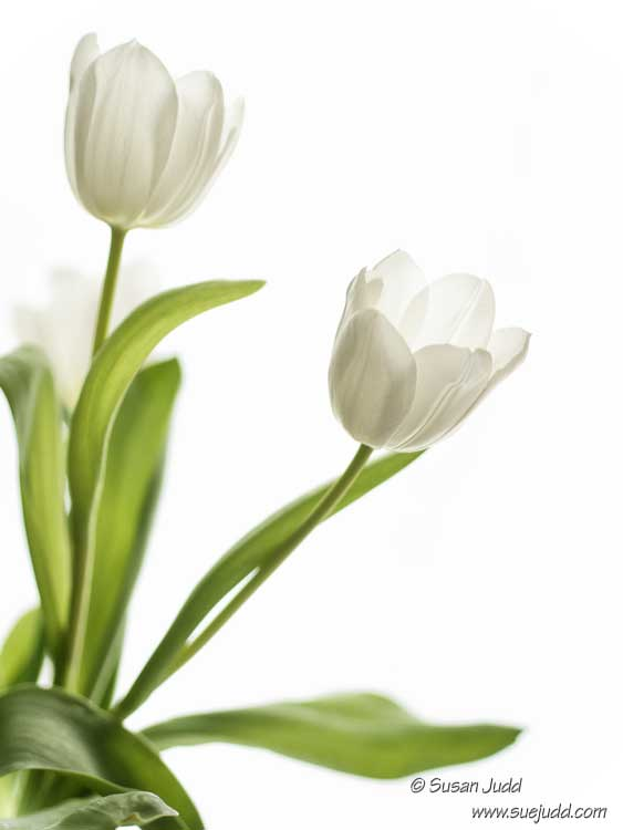 SJudd_Plants_2016-02-23-13---Version-2.