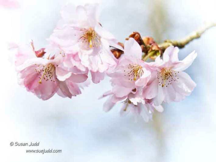 SJudd_Gardens_Walled Garden__2016-03-30 19 - Version 3