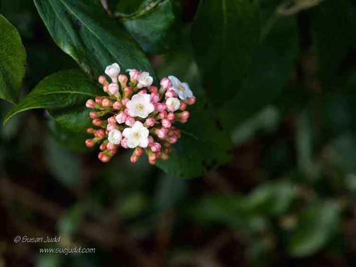 SJudd_Gardens_Walled-Garden__2016-03-30-9---Version-3
