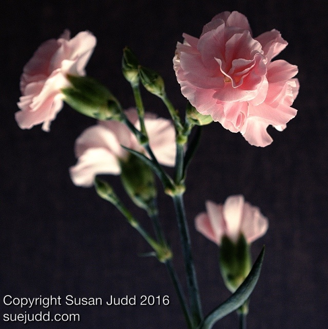 SJudd_Plants_12042016 3