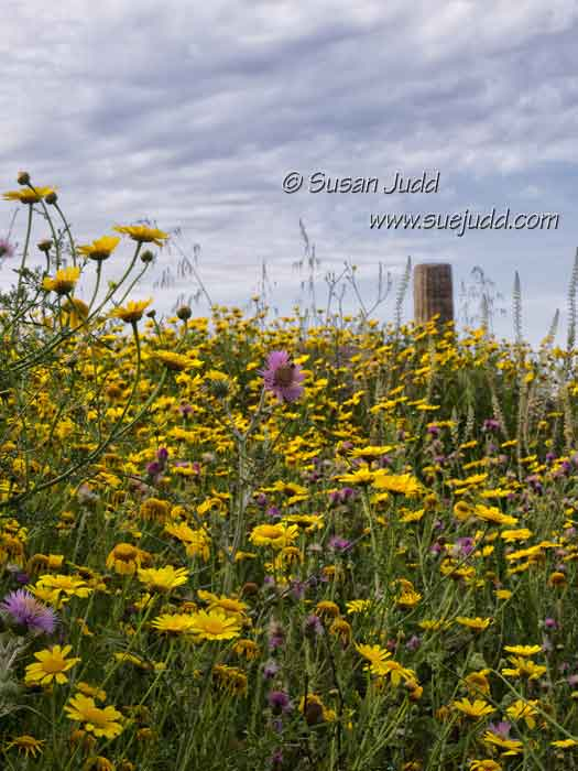 Wild Flowers at Selinunte, Sicily