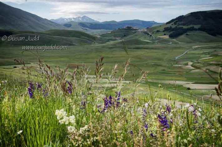 Piano Grande Wild Flowers
