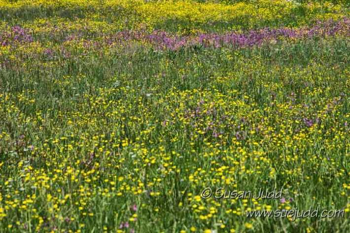 Abundant wild flowers