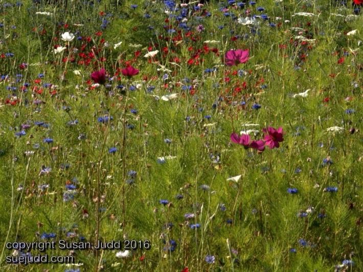 SJudd_UK_Gardens_14082016 2