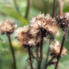 sjudd_gardens_wisley_2016-09-12-34-version-2