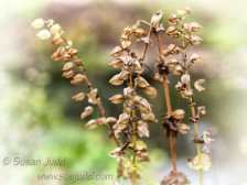 sjudd_gardens_wisley_2016-09-19-14-version-2