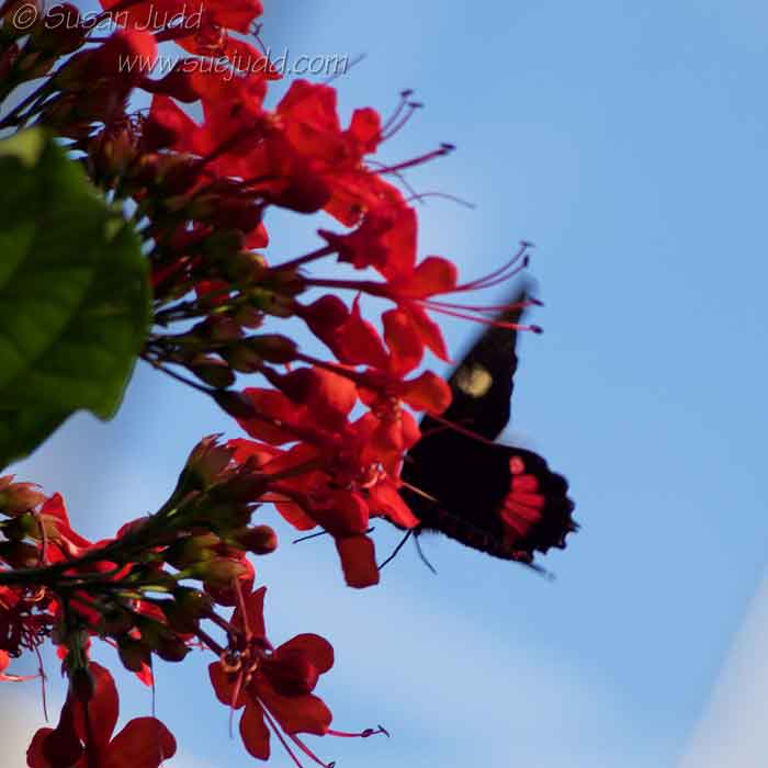 sjudd_gardens_wisley_2017-01-21-43-version-2-1