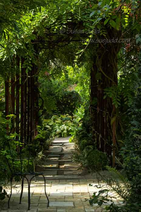 Leading somewhere, Jardin d'Agapanthe