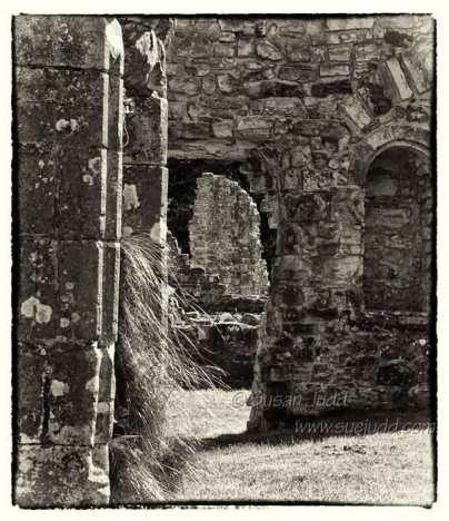 Bayham Abbey 5